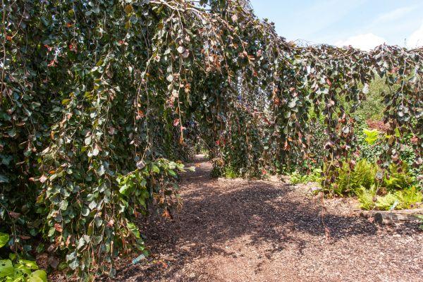 Rundum Grün: Pflanzen für Fassaden und Dächer