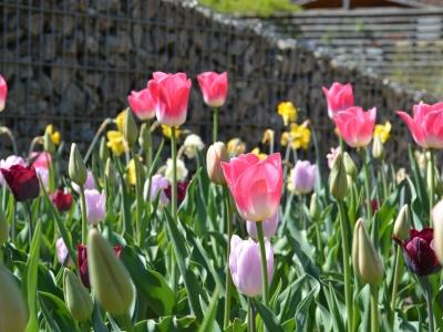 Die Garten Tulln - Galerie - Bild 984