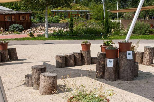 Botanische Besonderheiten aus Niederösterreich