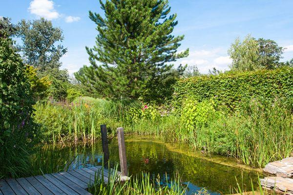Gesundheitswassergarten