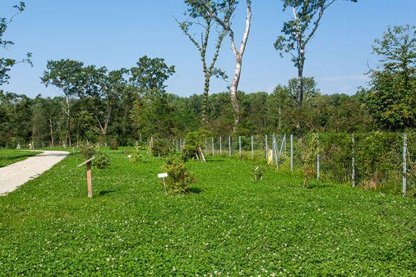 Garten Arboretum